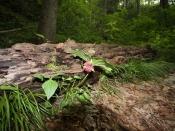 foliage0574