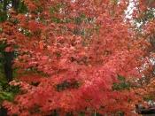foliage0944