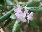 foliage1352
