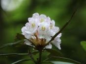 foliage3525
