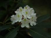 foliage3528