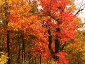 foliage8359