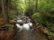 streams0597