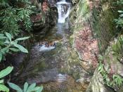 streams1402