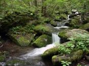 streams5136