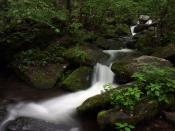 streams5184