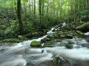 streams5197