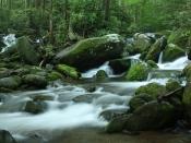 streams5204
