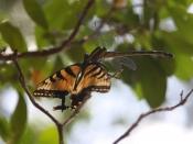 wildlife0159