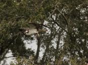 wildlife1448