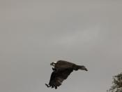 wildlife1449