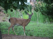 wildlife2953