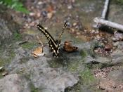 wildlife2993
