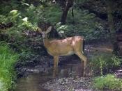 wildlife3696